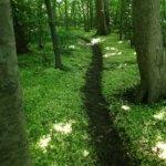 Mindfulness og naturen